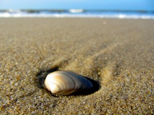 Clam Perspective