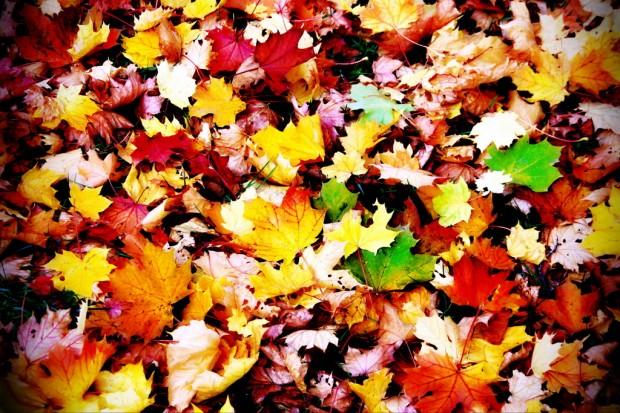 2012-10-21 - Autumn Colors